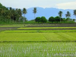 Philippines rice Industry
