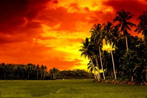 Bohol-Island-Philippines-Field-at-sunset